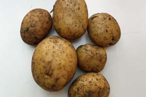 Skræller du kartoflerne?